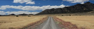 Road splitting through fields of sagebrush leading to tree covered mountains at Outback