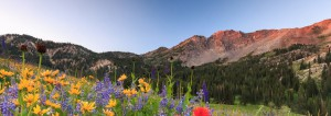 Wilderness scene of Yellow and purple flowers in the foreground, with green trees and red tinted mountains in background