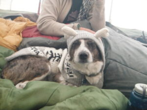 Wilderness Therapy field dog wearing sweater and hood in tent