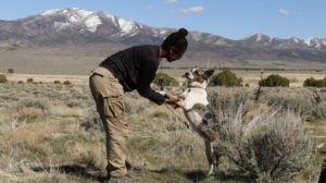 Field dog on hind legs with wilderness therapy girl in the desert